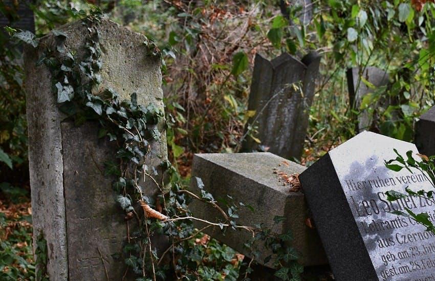 anciennes stèles avec de la lierre dans un cimetière