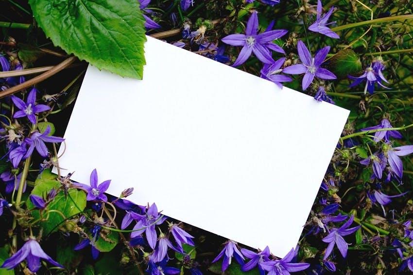 enveloppe blanche au milieu de fleurs violettes