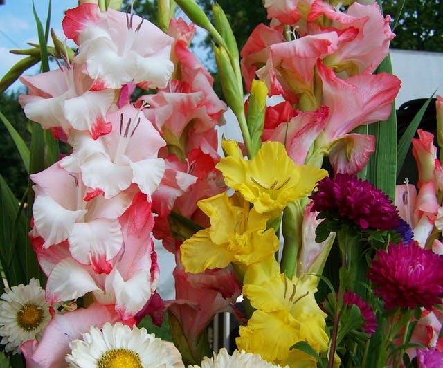 bouquet de glaïeul