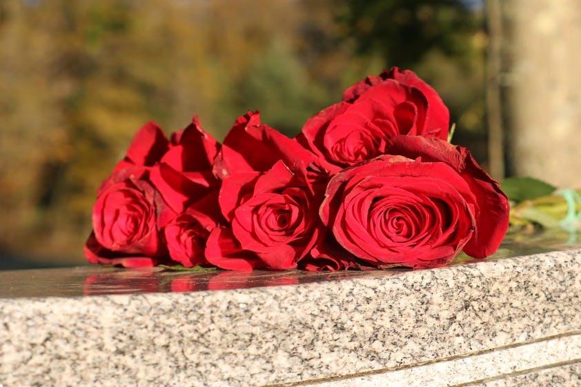 fleurs coupées, roses
