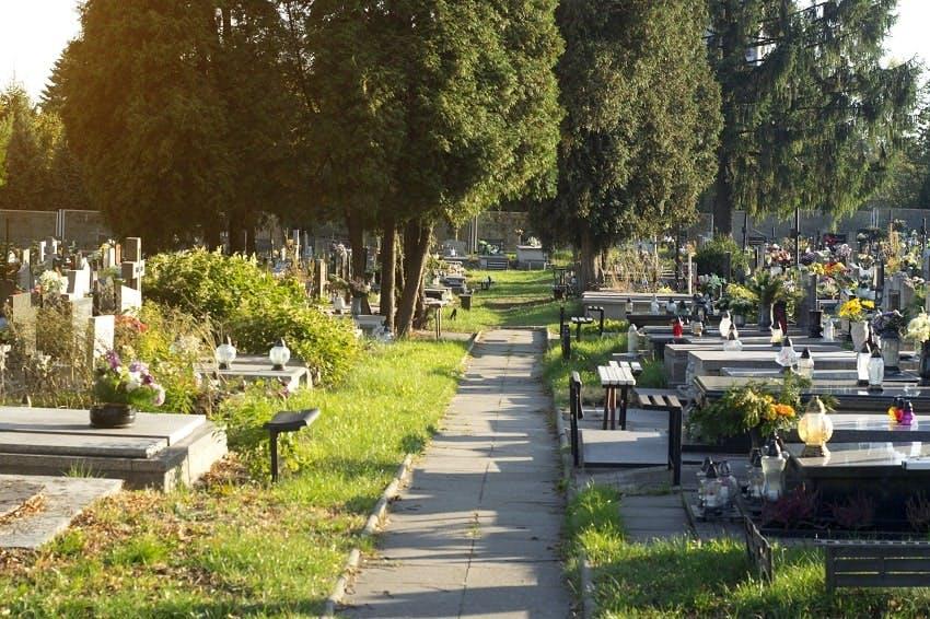allée dans cimetière enherbé et arboré par belle journée ensoleillée