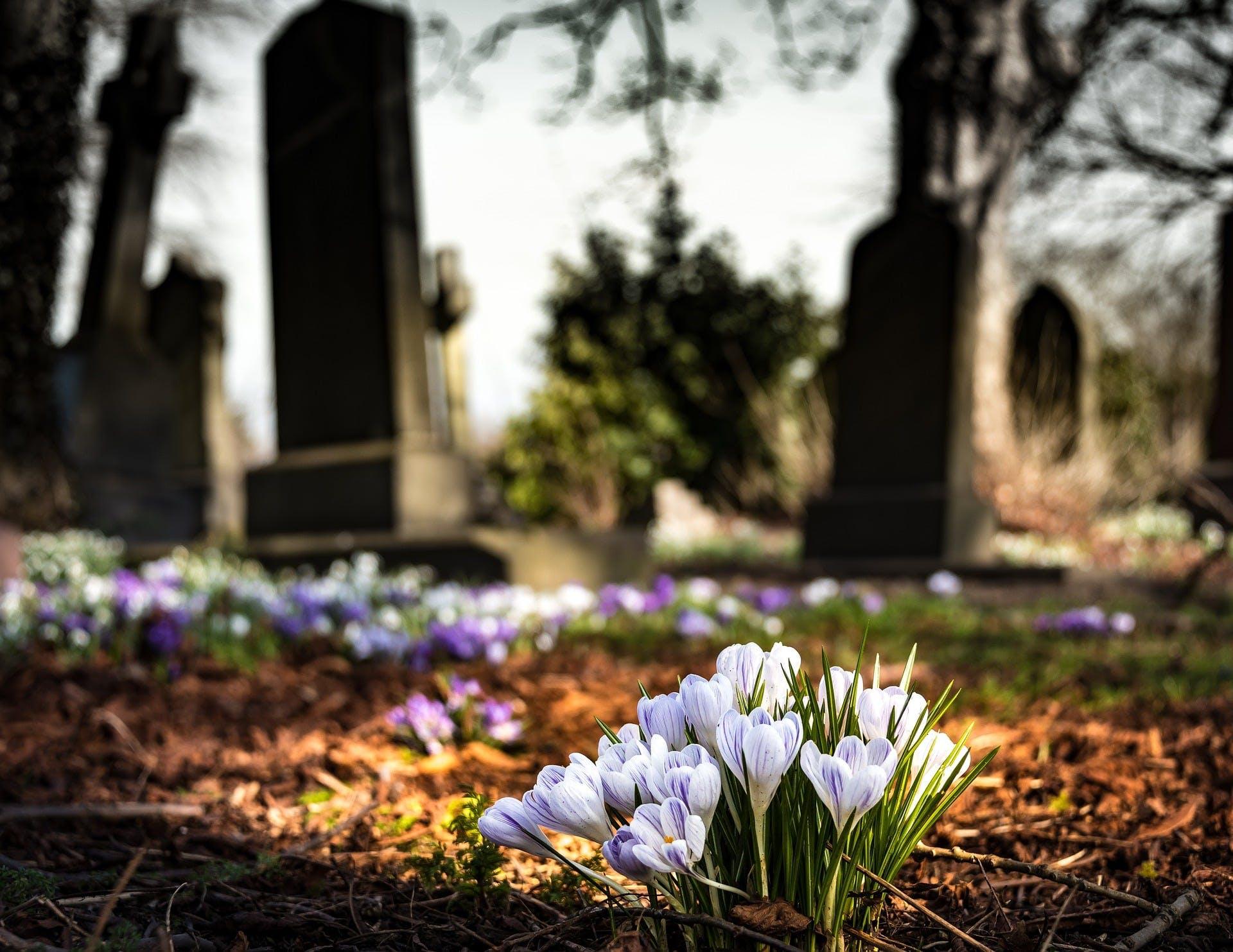 Vue sur cimetière fleuri