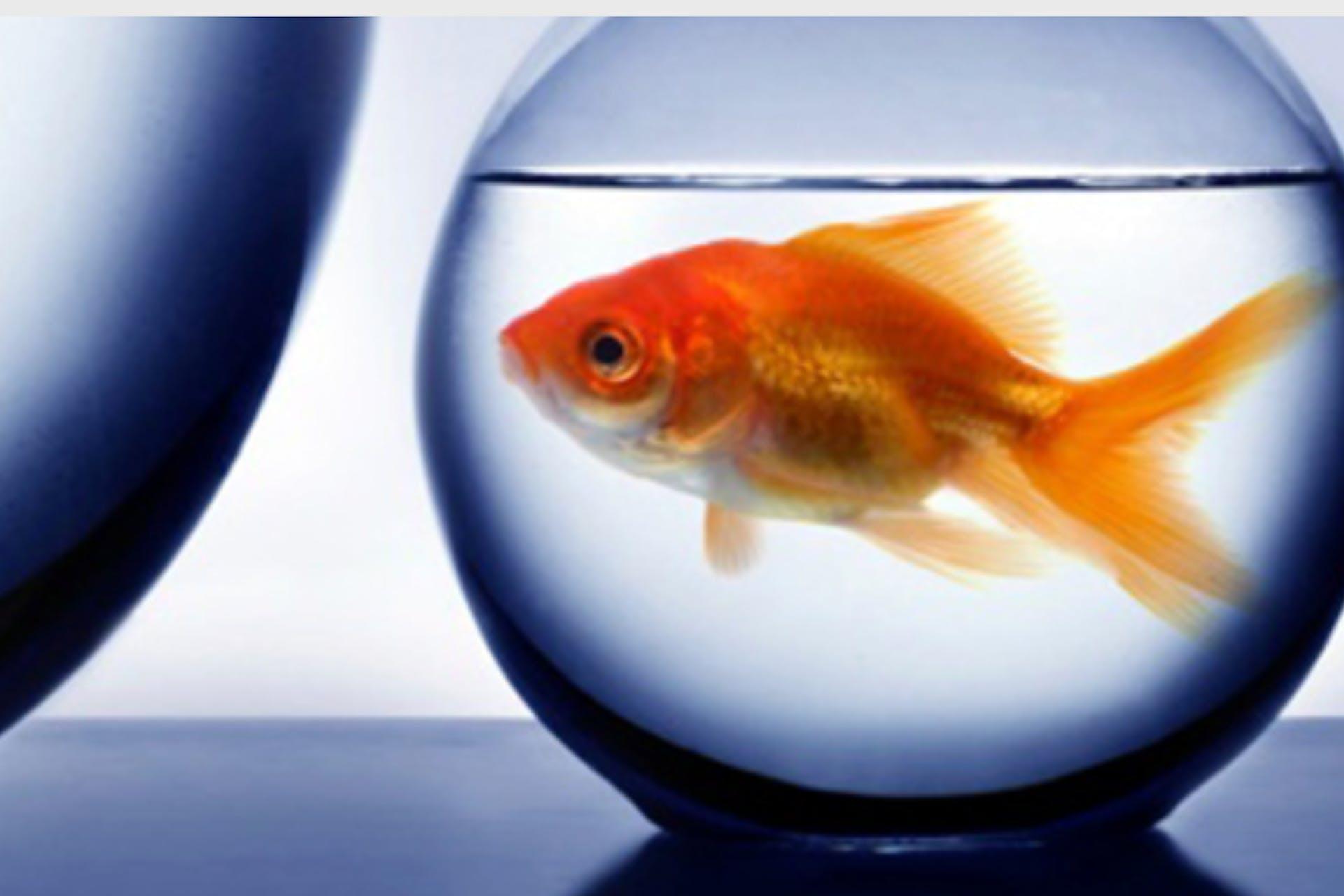 social handles goldfish bowl