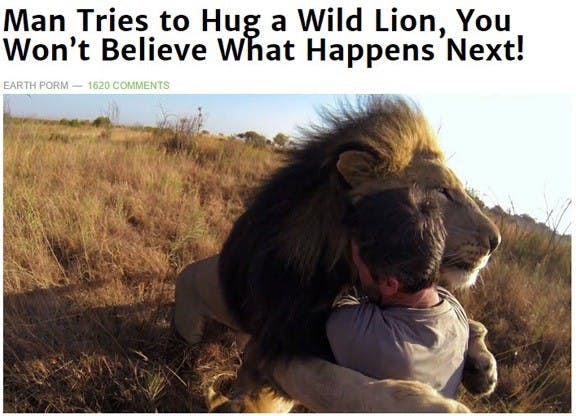 man hugging a wild lion for clickbait