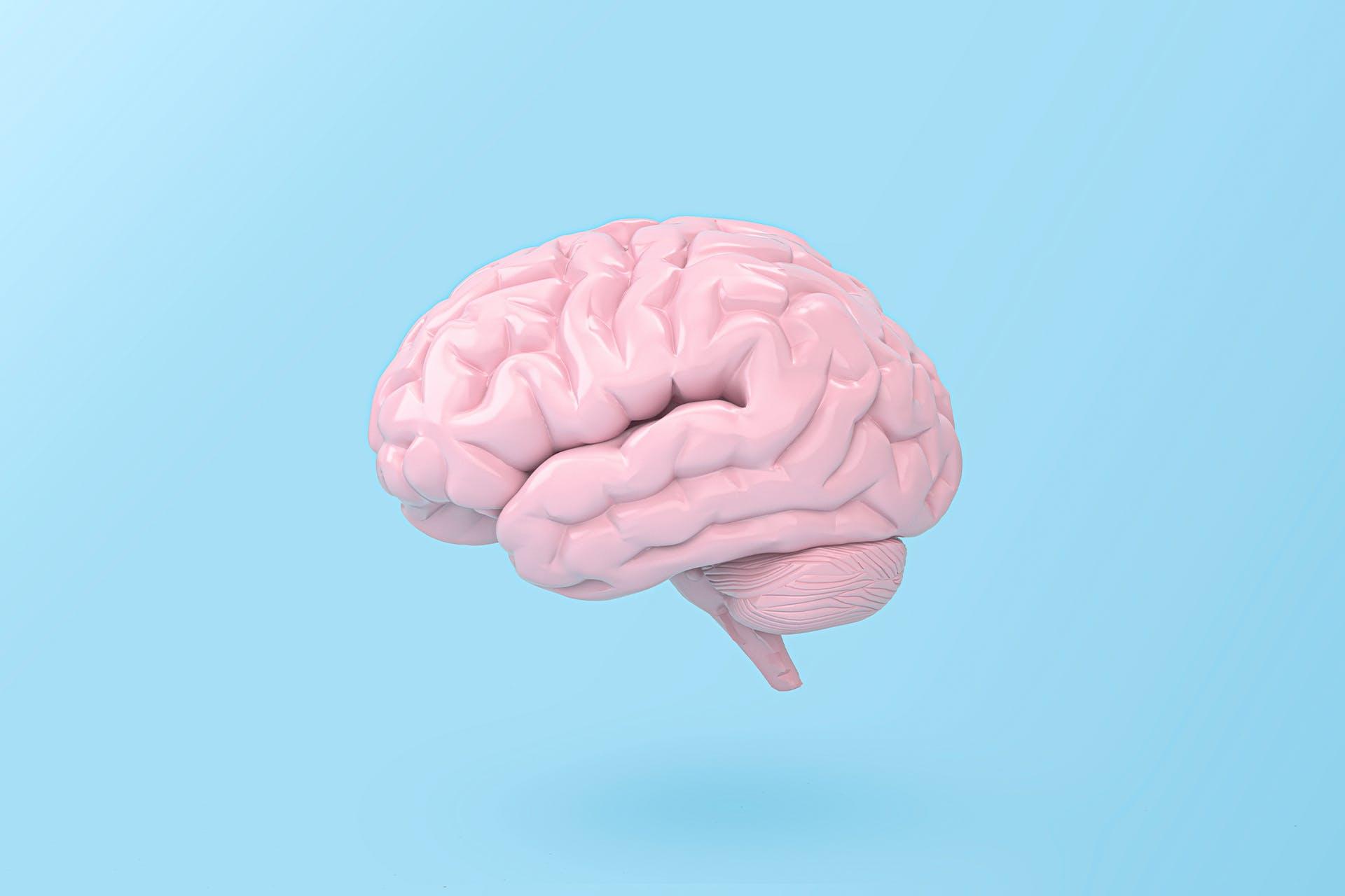 Image of human brain on blue background. Psychology of social media blog post