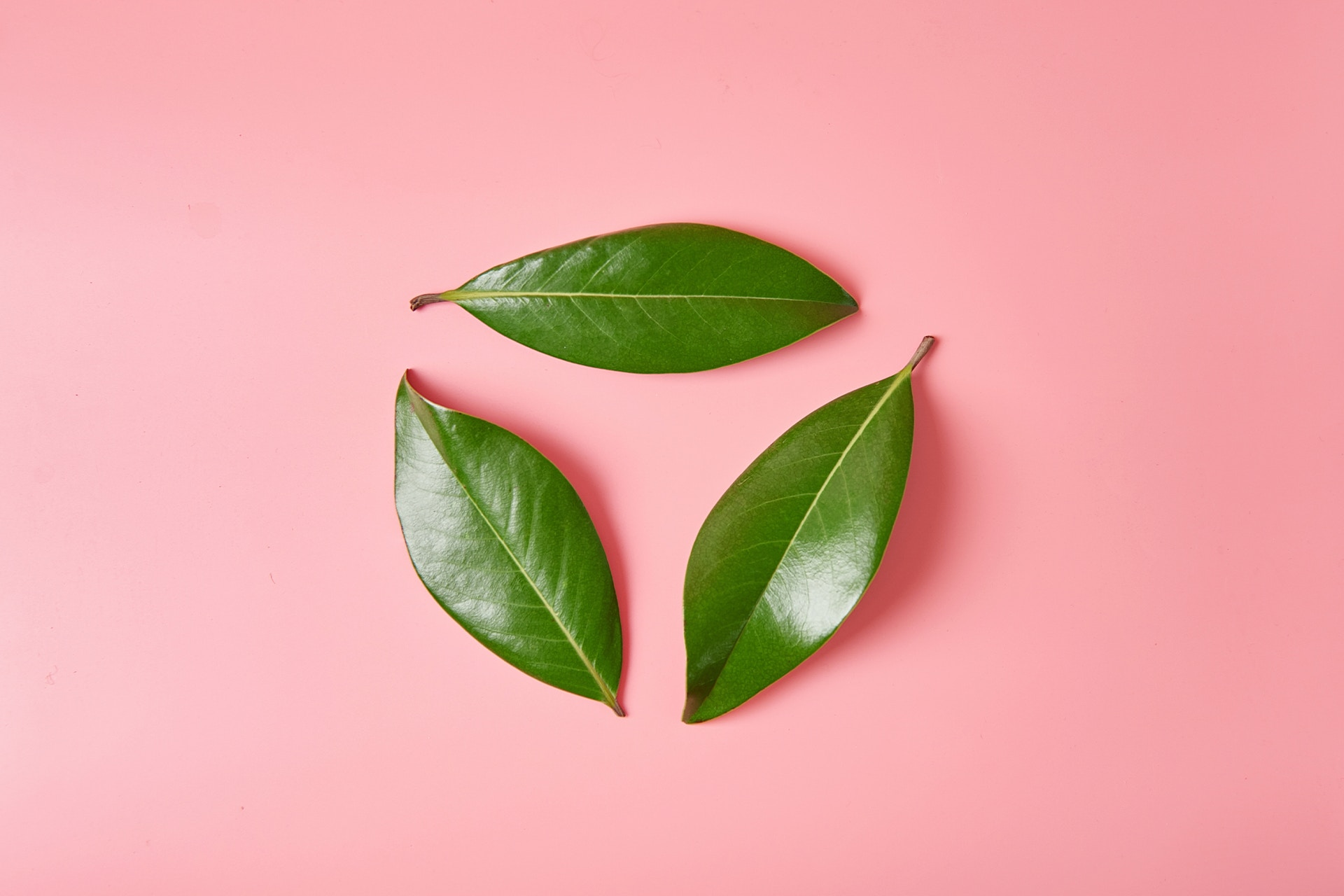 Three green leaves forming a circle on a pink background. Blog post: Environmental social media campaigns