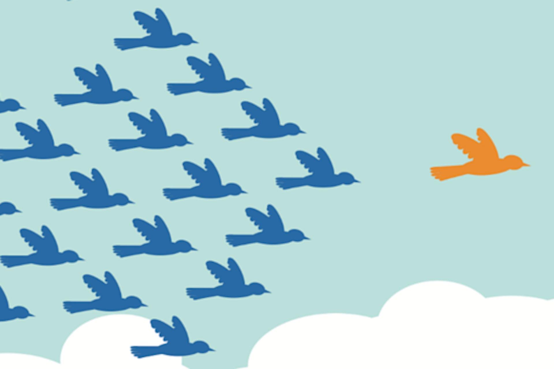 Yksi lintu lentämässä parven edellä