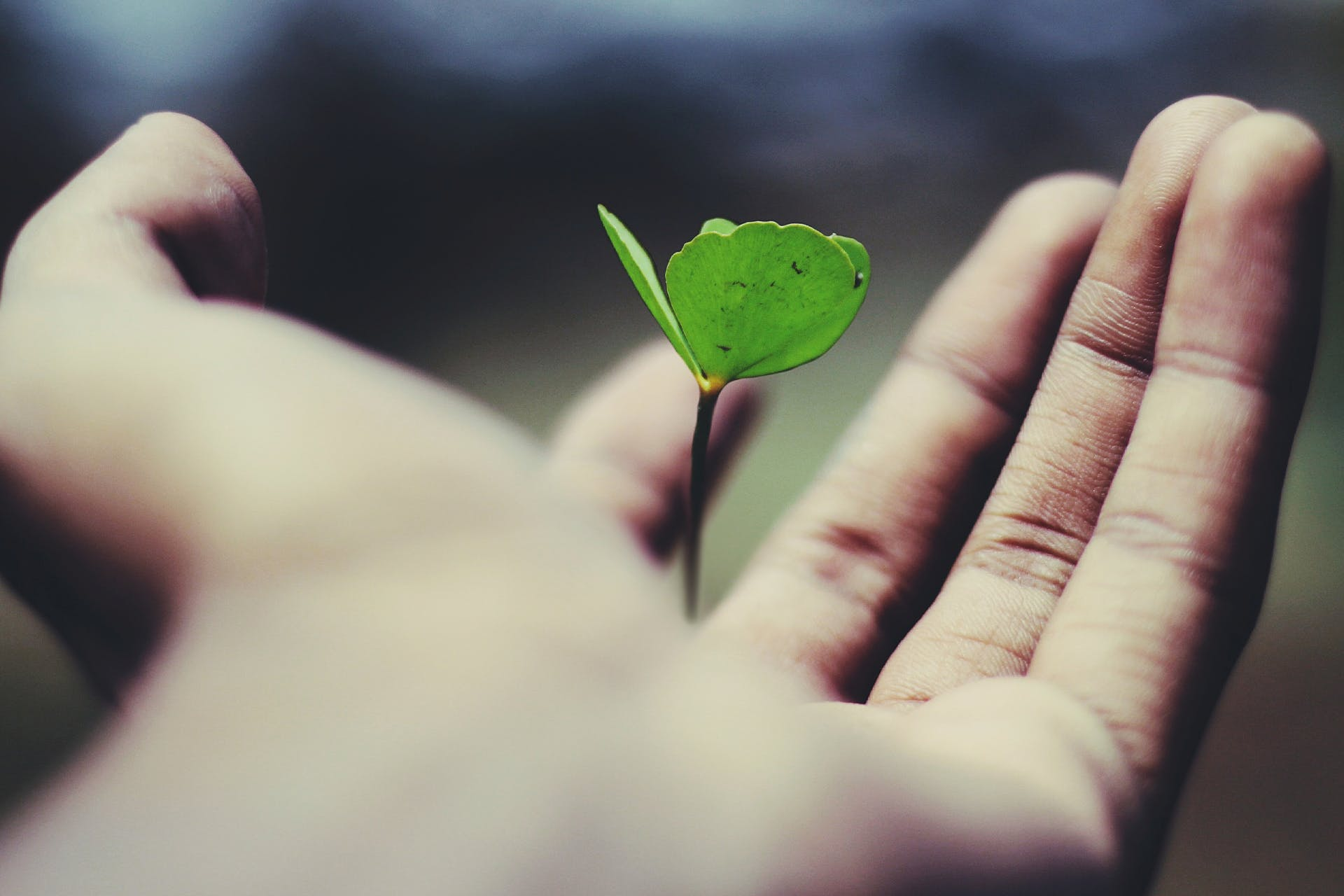 An image of a hand holding a seed that has sprouted. This image is the header for our blog about growth hacking for marketers.