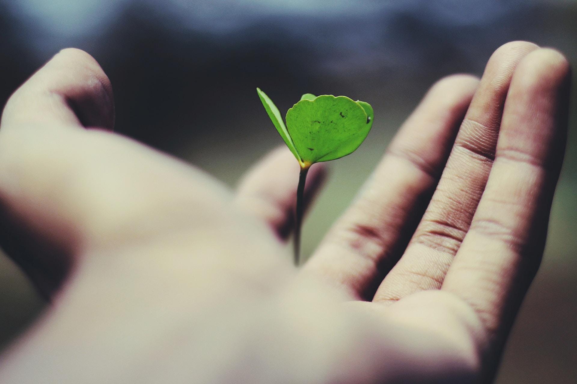 Une image d'une main tenant une graine germée. Cette image est l'en-tête de notre blog sur le growth hacking pour les professionnels du marketing