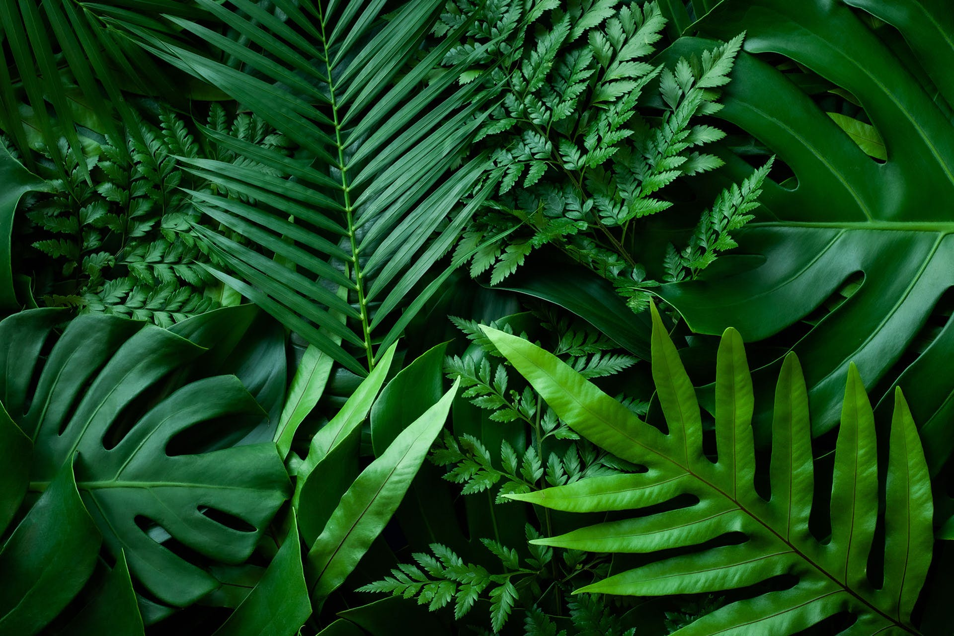Man sieht grüne Pflanzen sich überlappen. Das ist das Titelbild für unseren Beitrag zu Corporate Social Responsibility (CSR)
