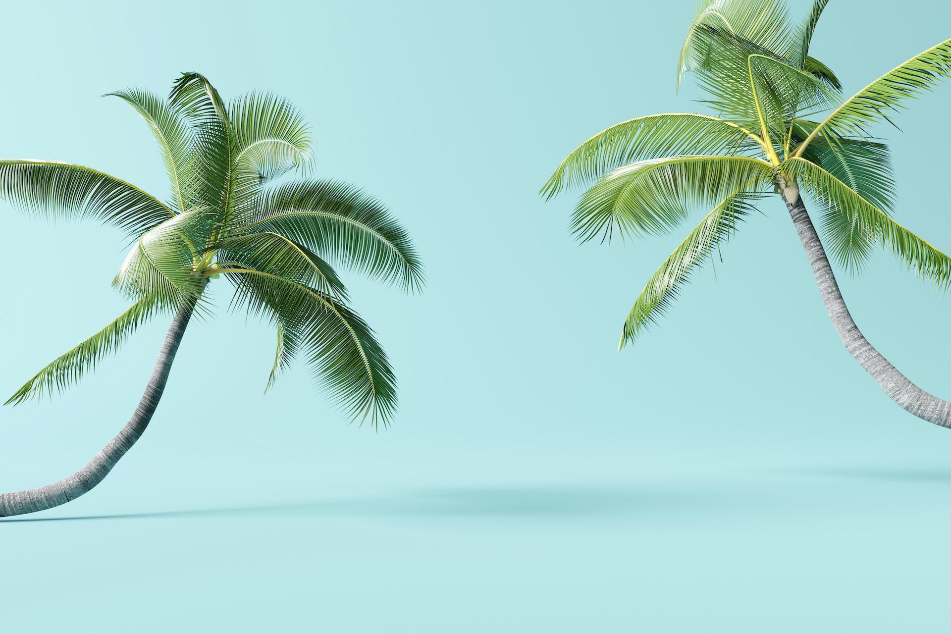 Man sieht ein Foto von zwei Palmen vor einem türkisen Hintergrund als Verbildlichung für Evergreen Content