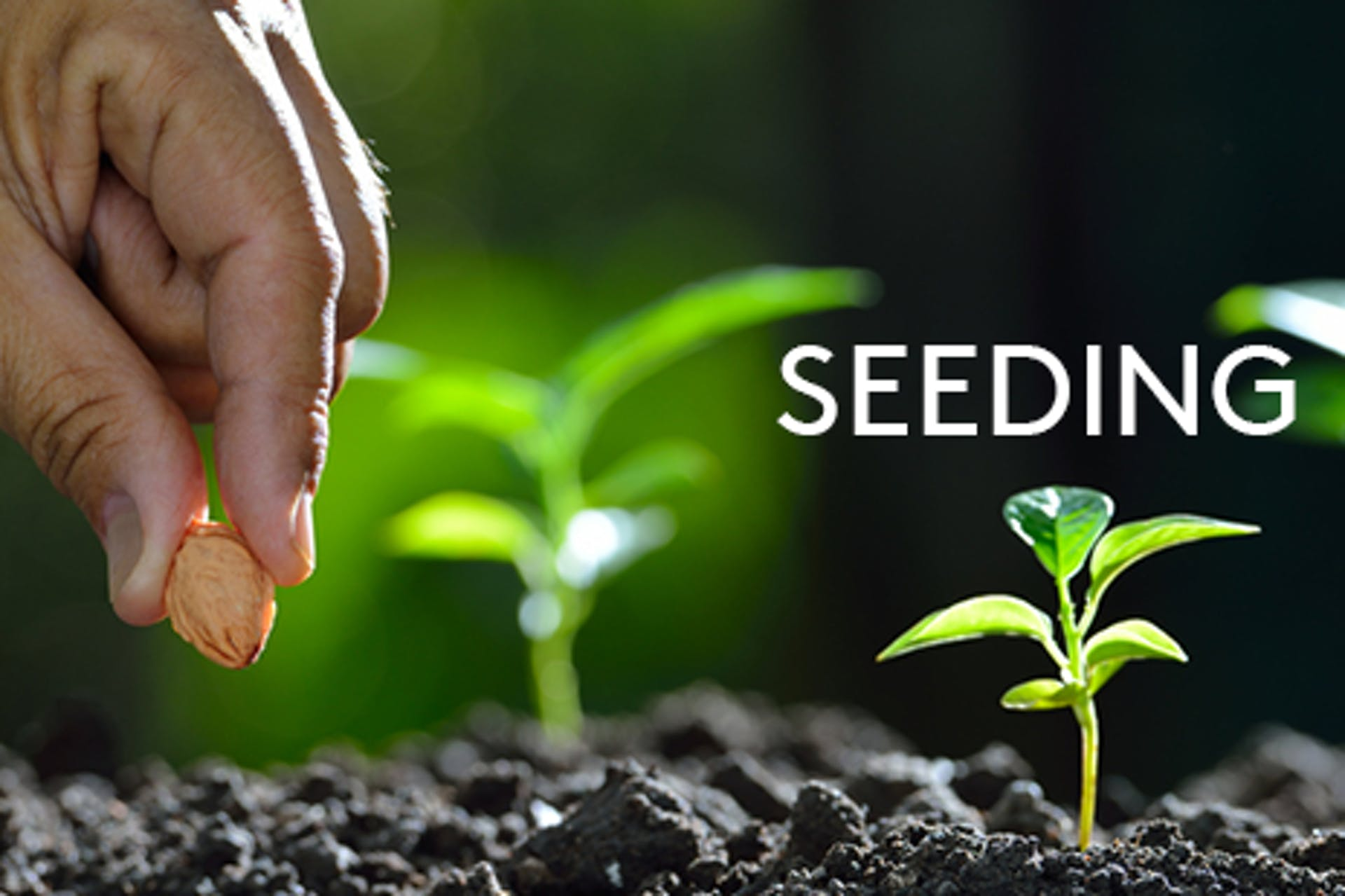 Foto Samen pflanzen Aufschrift Seeding