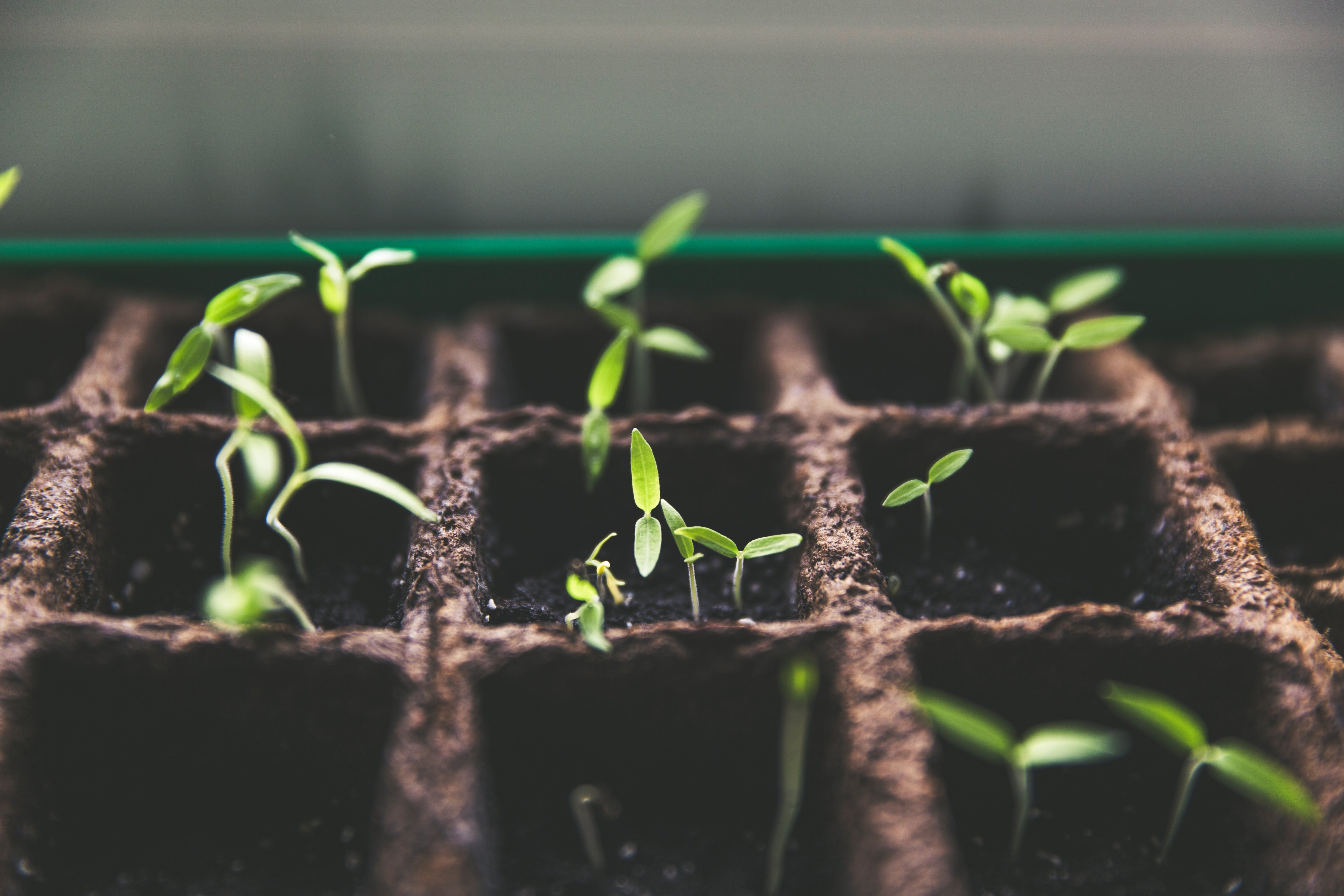 Just like seedlings planted and growing with sunlight care, Instagram followers won't grow without engagement and careful cultivation