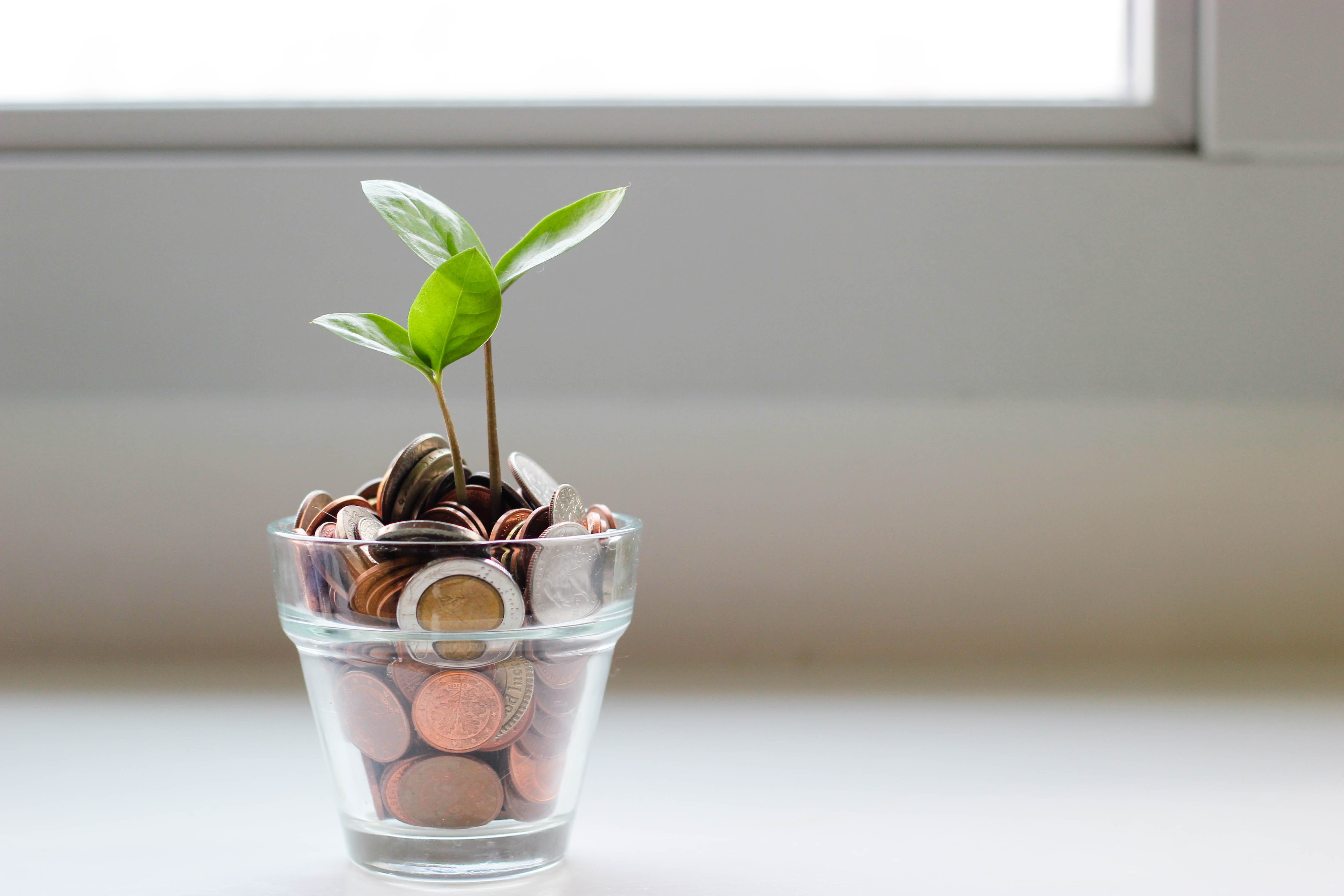 Plant growing from a jar of coins