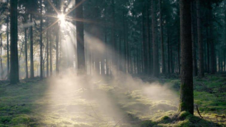 Sunlight streaming through trees onto mossy floor