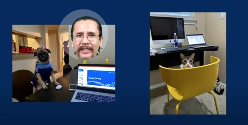 犬と猫の画像と一緒に映る男性の顔