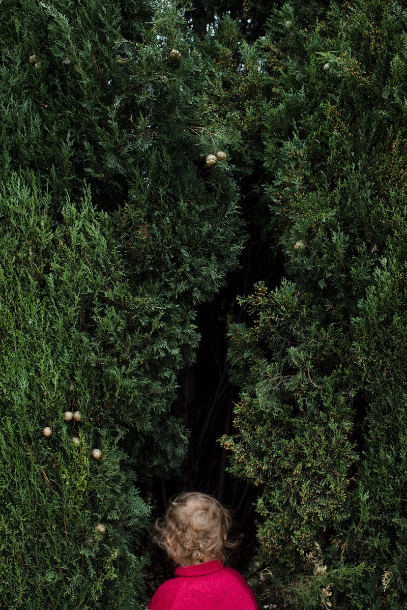 Et barn står og kigger ind i en stor grøn busk