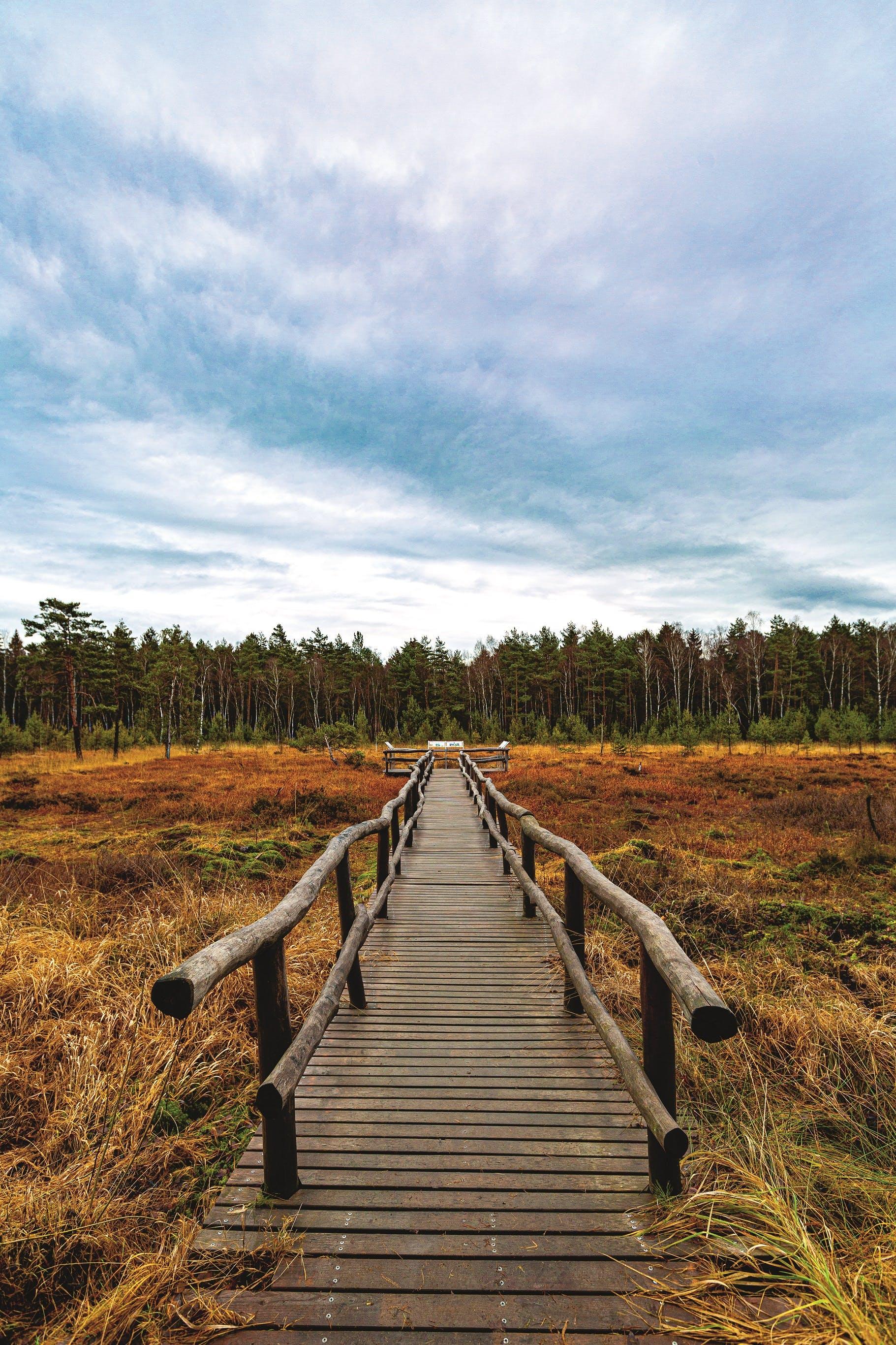 Naturpark Heidenreichsteiner Moor, neben der Wasserburg eines der touristischen Highlights der Stadt