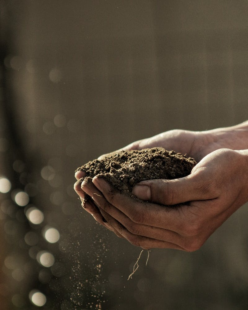 A person's cupped hands full of soil.