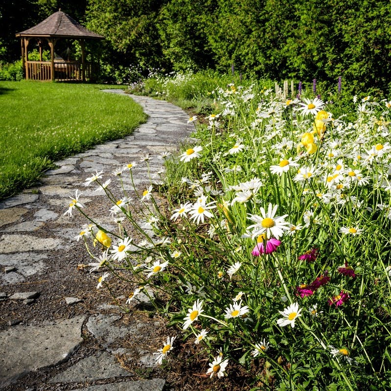 Beautiful wild flowers planted along a pathway in a garden. Rewild your garden with such colours and biodiversity.