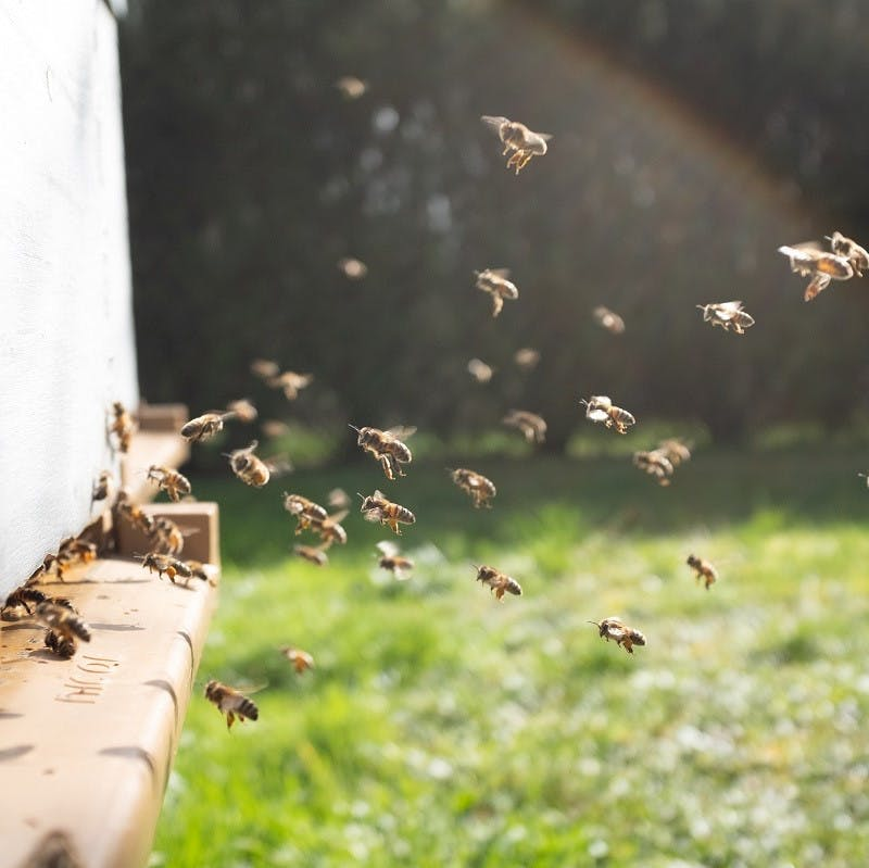 Bees flying towards a hive.