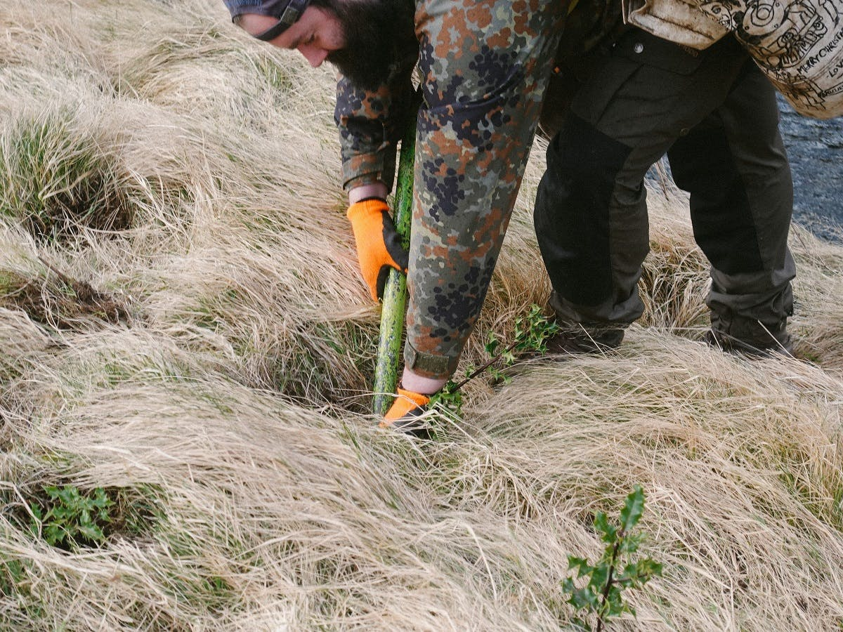 Mossy Earth planting native trees to help reverse the years of deforestation witnessed in Scotland