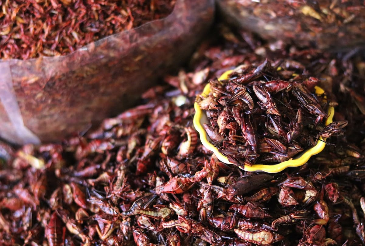 A pile of edible insects on sale at an insect market.