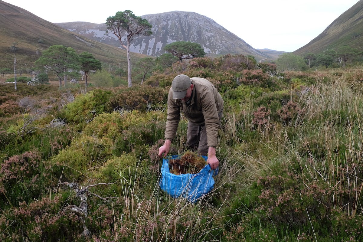 Reserve manager Innes collects moss and other vegetation