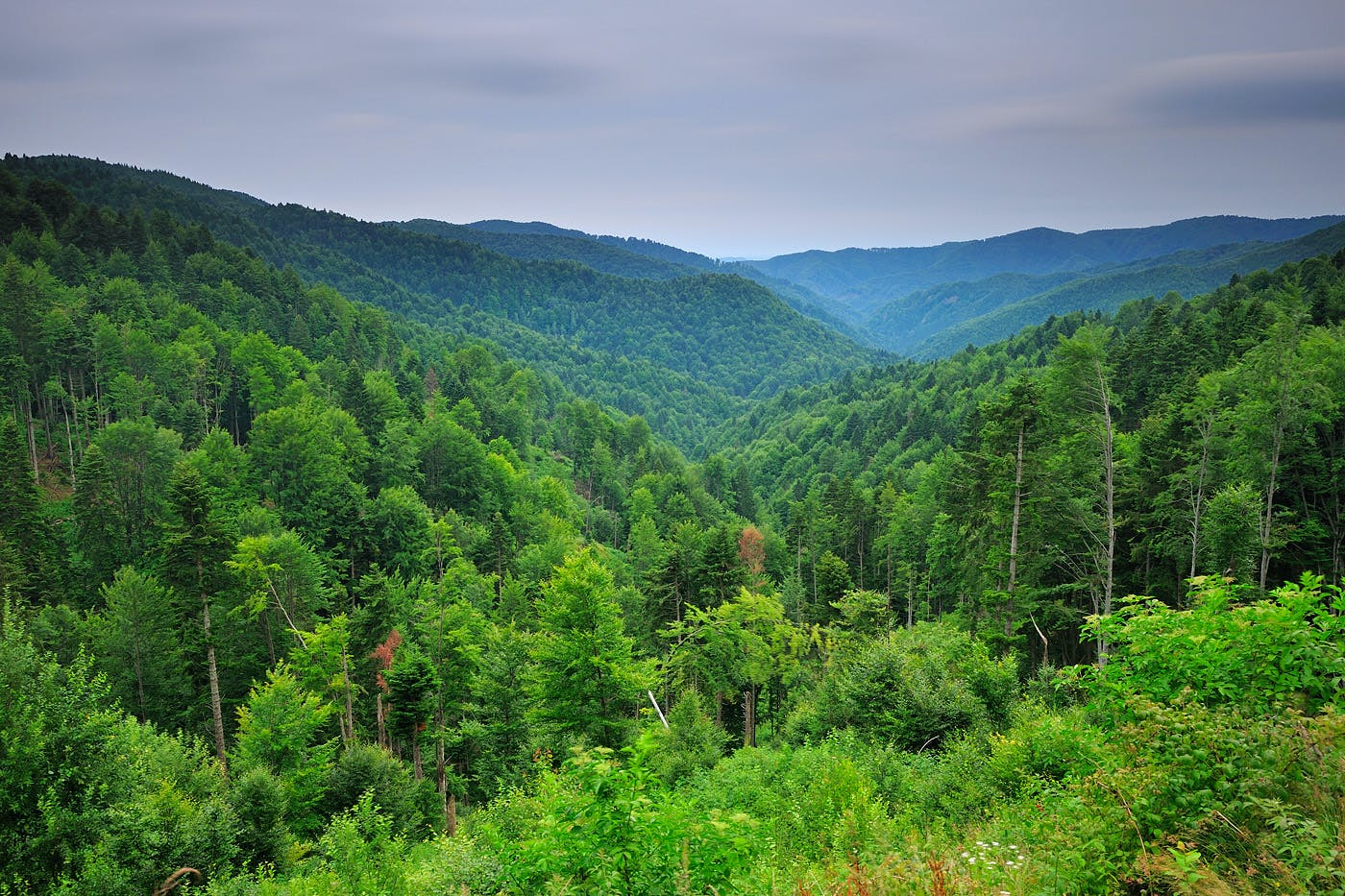 The view of a lush green forest across several valleys.