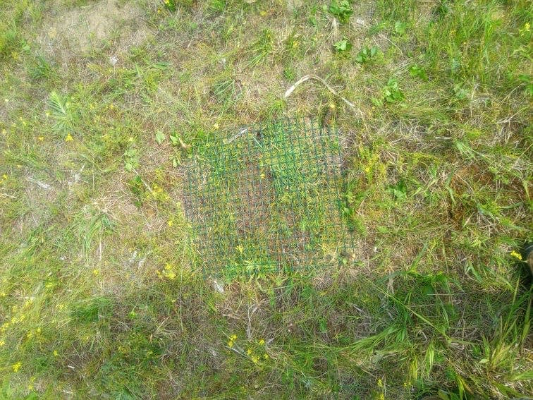 Wire fencing placed above an active nest in a grassy field