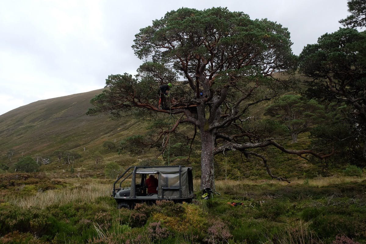 Mossy Earth building an eagle nesting platform in Scotland as part of their rewilding Britain efforts.