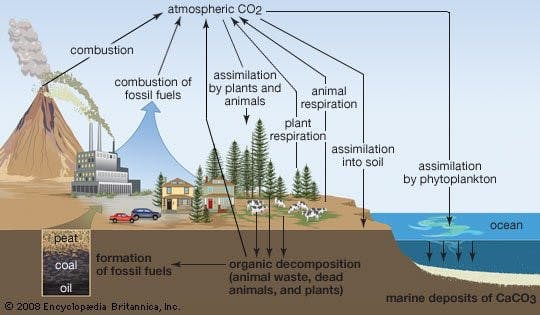 An infographic depicting the carbon cycle