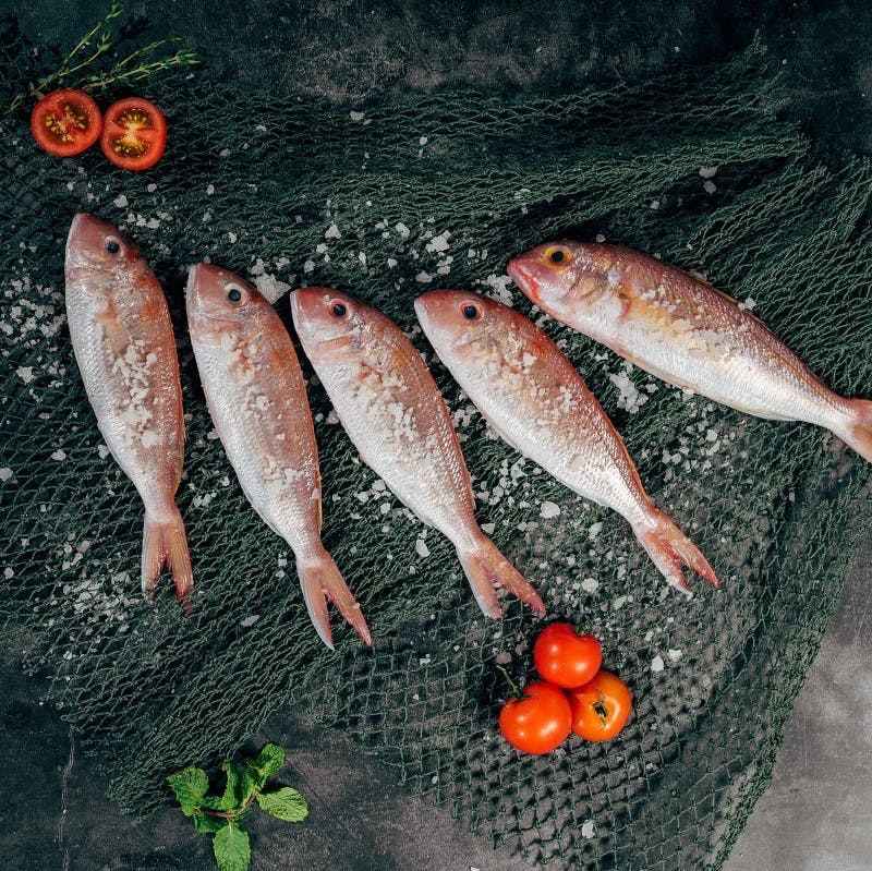 Fish laid out on a fishing net being prepared for food.
