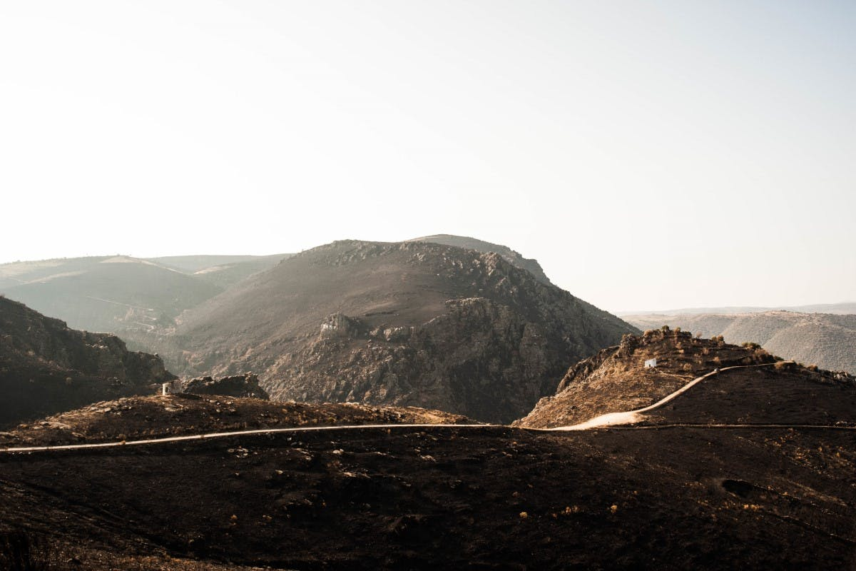 Douro Valley after wildfires in 2017. Such wildfires has made it difficult for the local Griffon vultures, Black vultures and Egyptian vultures to find prey.