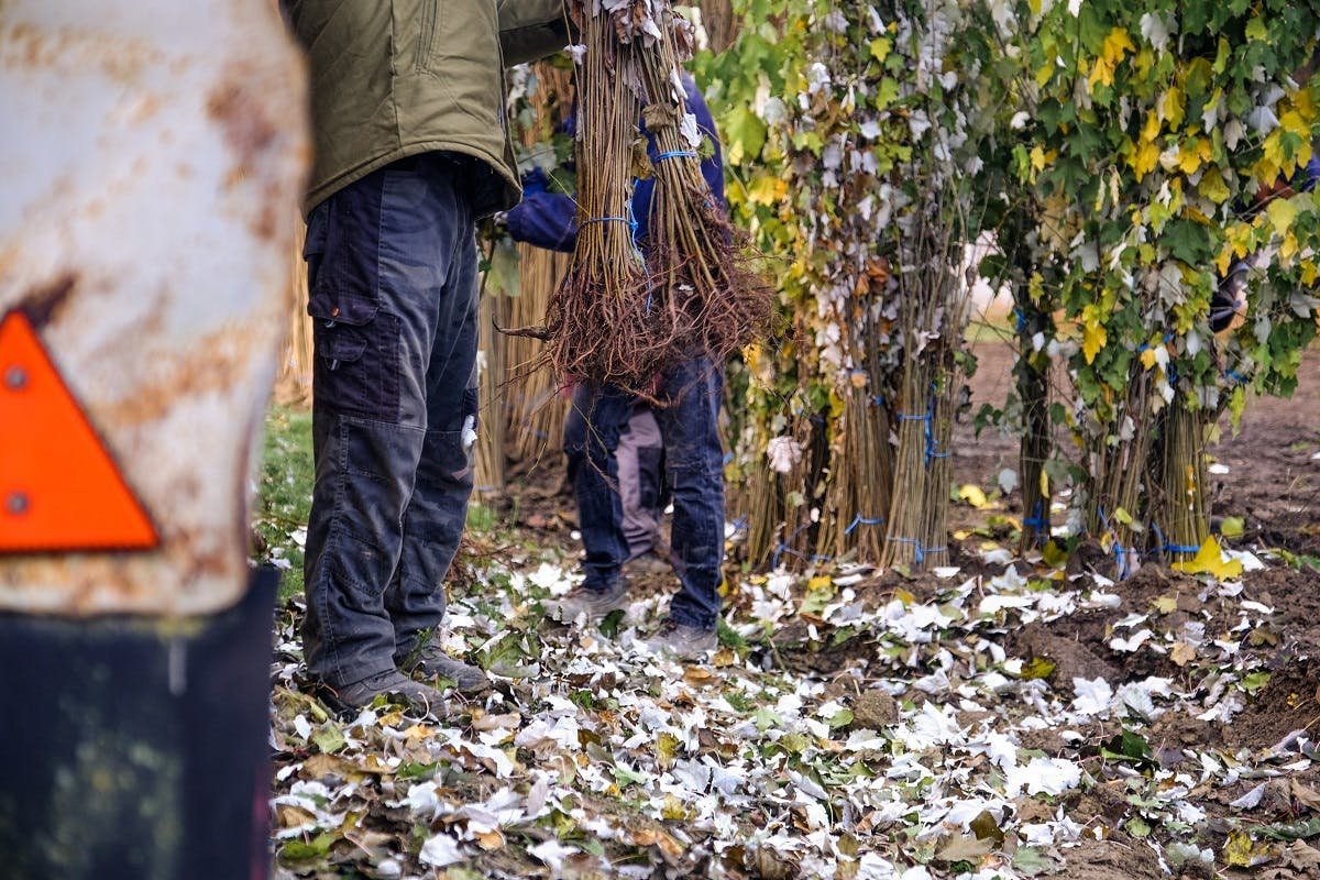 Tree planting preparations in Slovakia