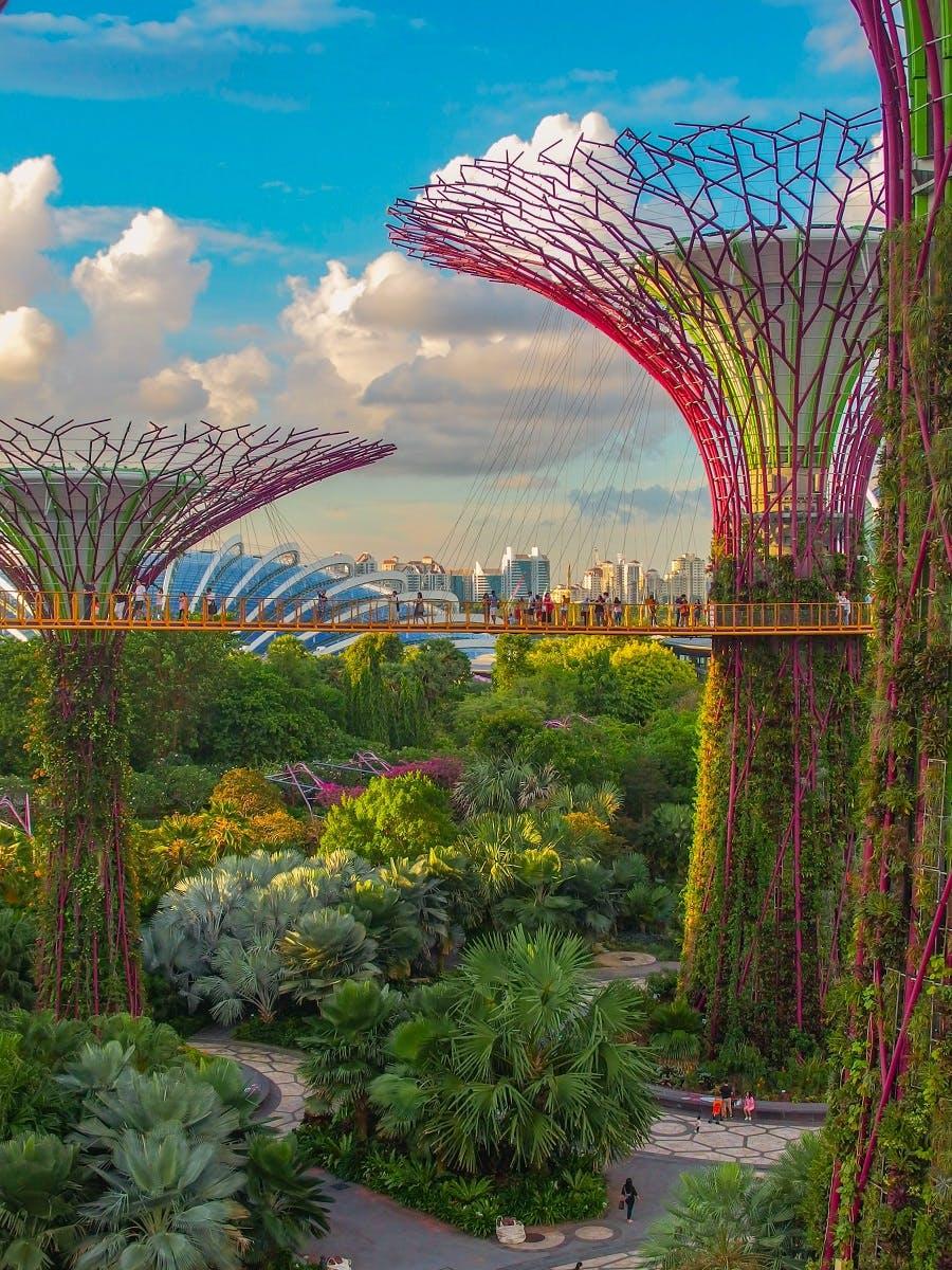 Singapore's Supertrees