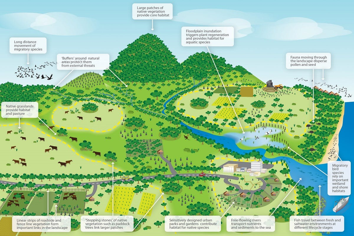 A graphic showing a diverse range of biodiversity with the use of wildlife corridors