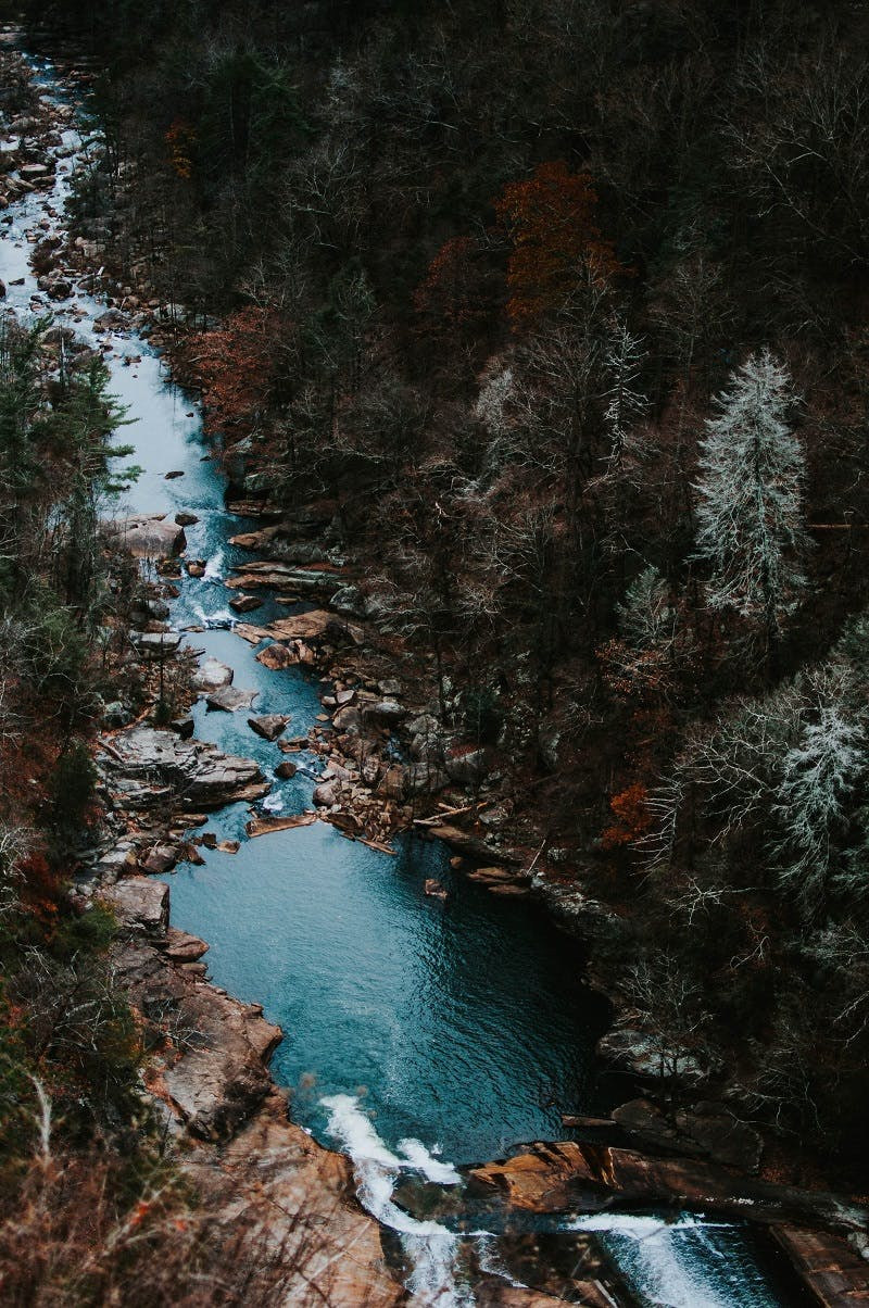 A river with trees lined along it. Tree planting can help stabilize water temperatures and protect salmon populations.