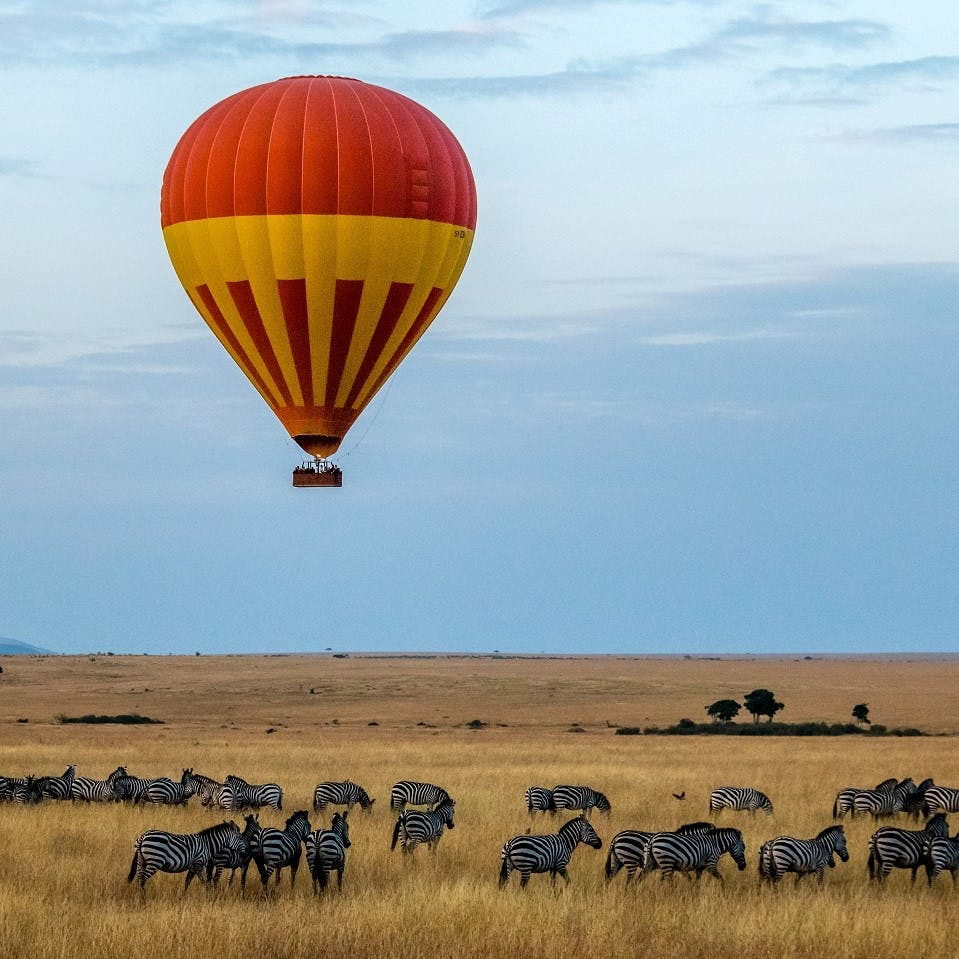 A hot air balloon taking people on a nature based tourism safari over a herd of wildebeest. Rewilding can provide sustainable livelihoods for rural communities through nature-based tourism