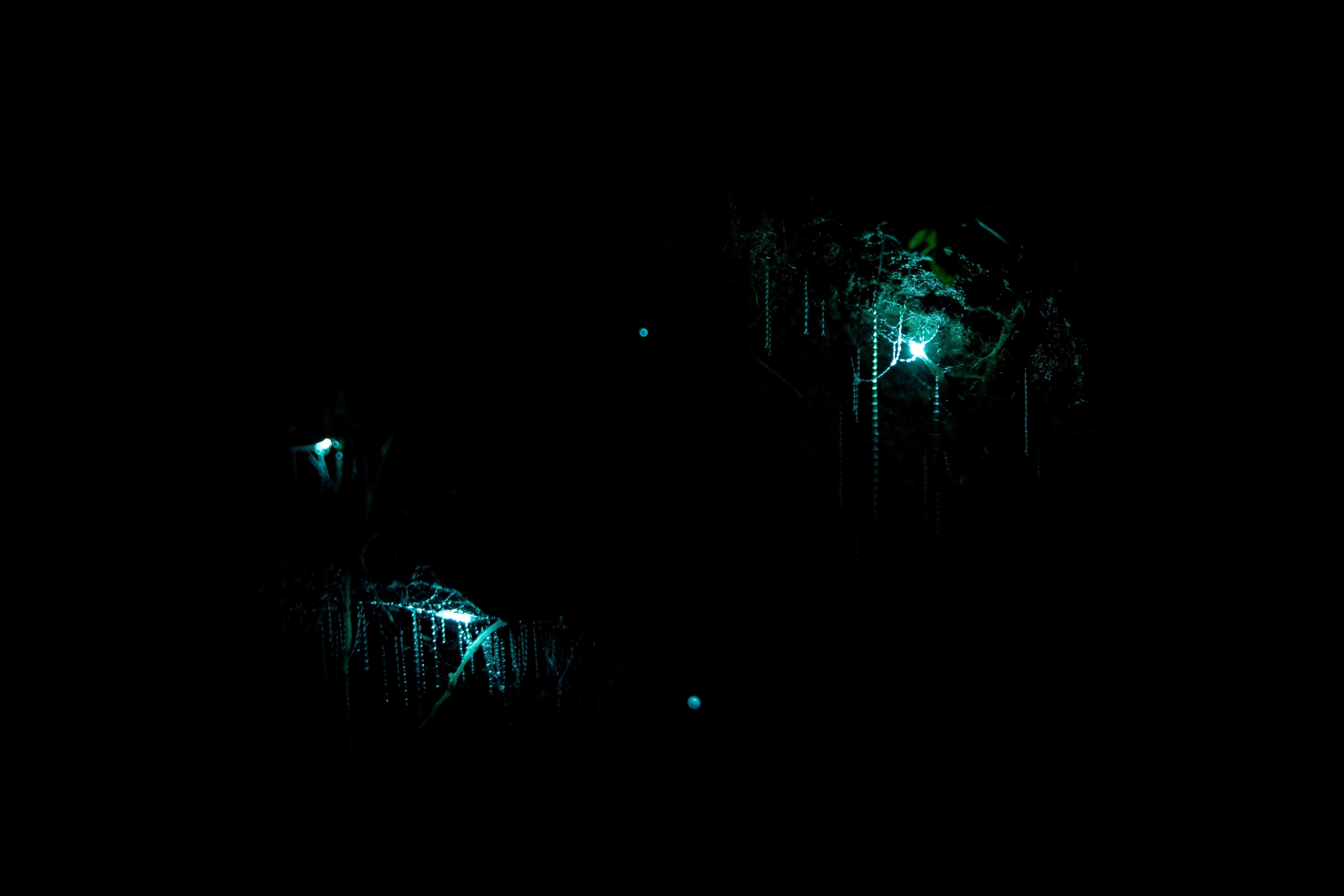 Blue light and sticky web beads of New Zealand glowworms in dark cave.