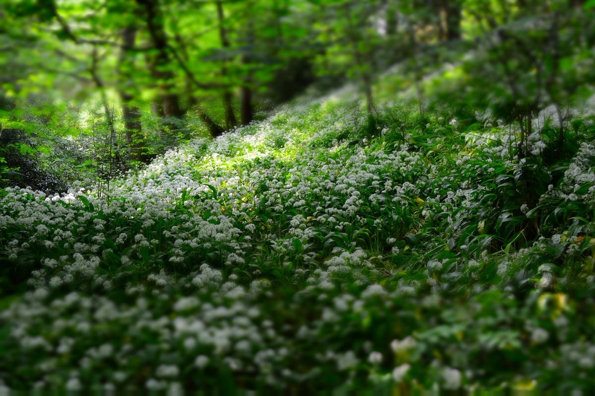 Flowers in a forest.