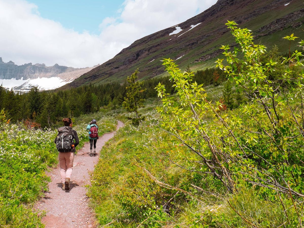 Hikers walk down a trail of wildflowers and conifer trees towards a snow covered mountain. Rewilding promotes nature based tourism.