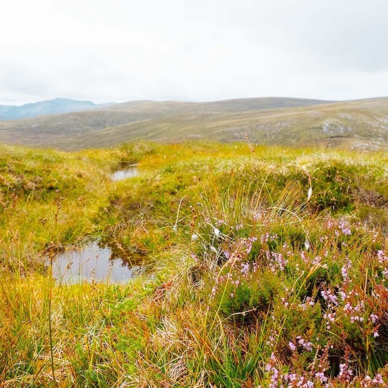 A peatland ecosystem in the Scottish Highlands