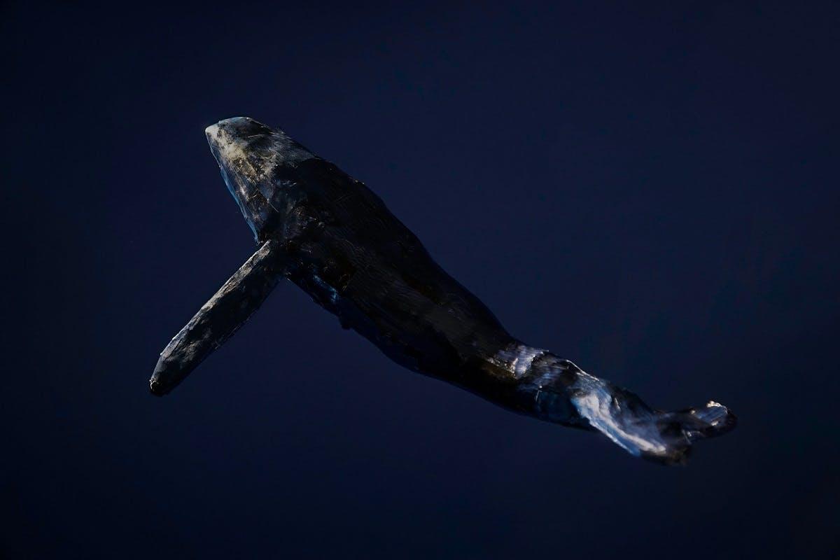 A whale in the deep, dark ocean.
