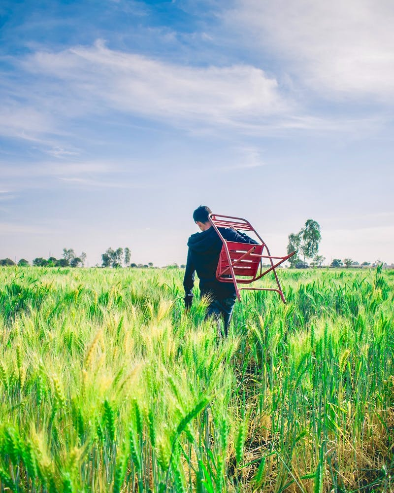 A man walking through a cornfield with a red chair slung over his shoulder.