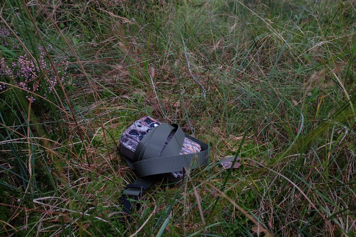 A camera trap sits on the moss field layer of the pinewood