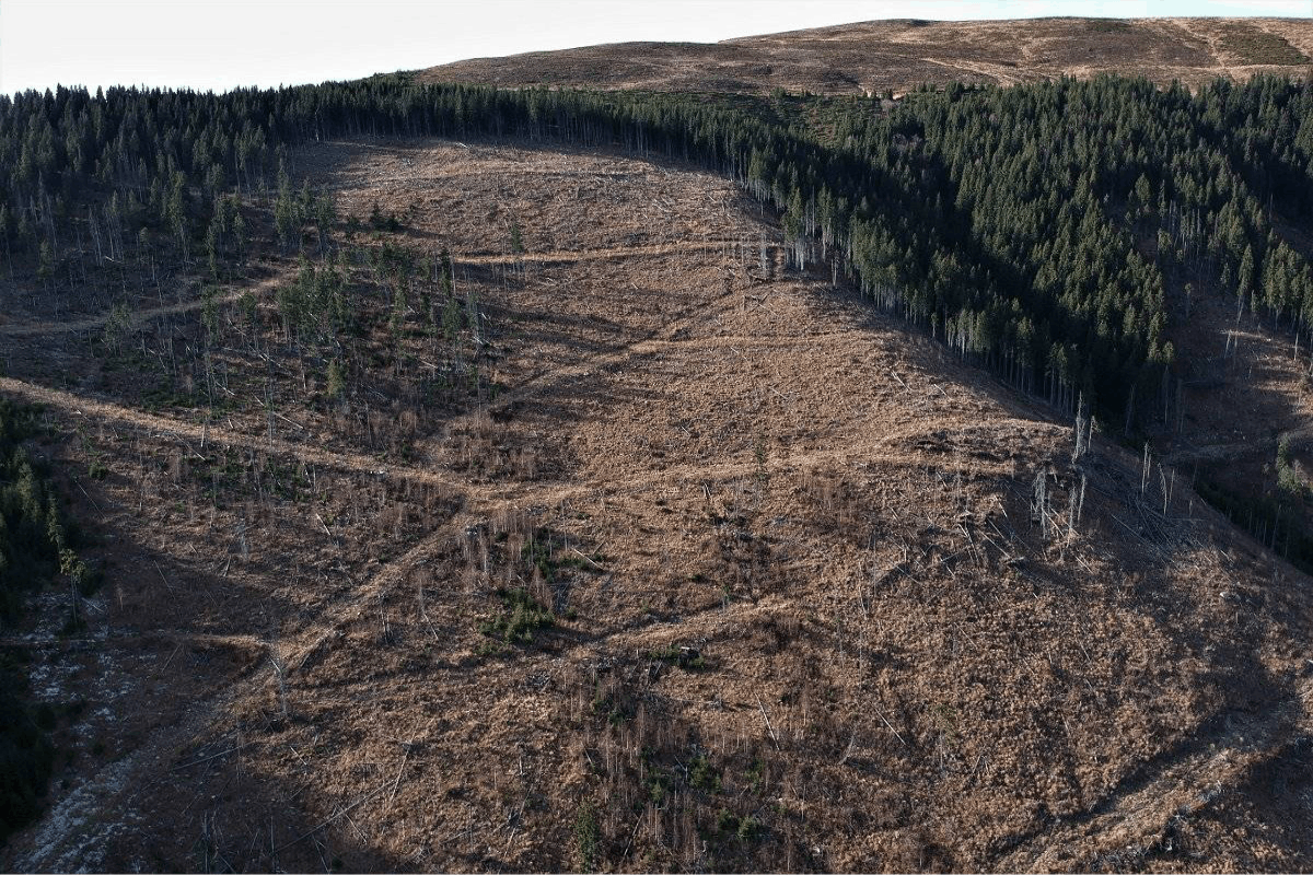 A hillside is clear cut for timber