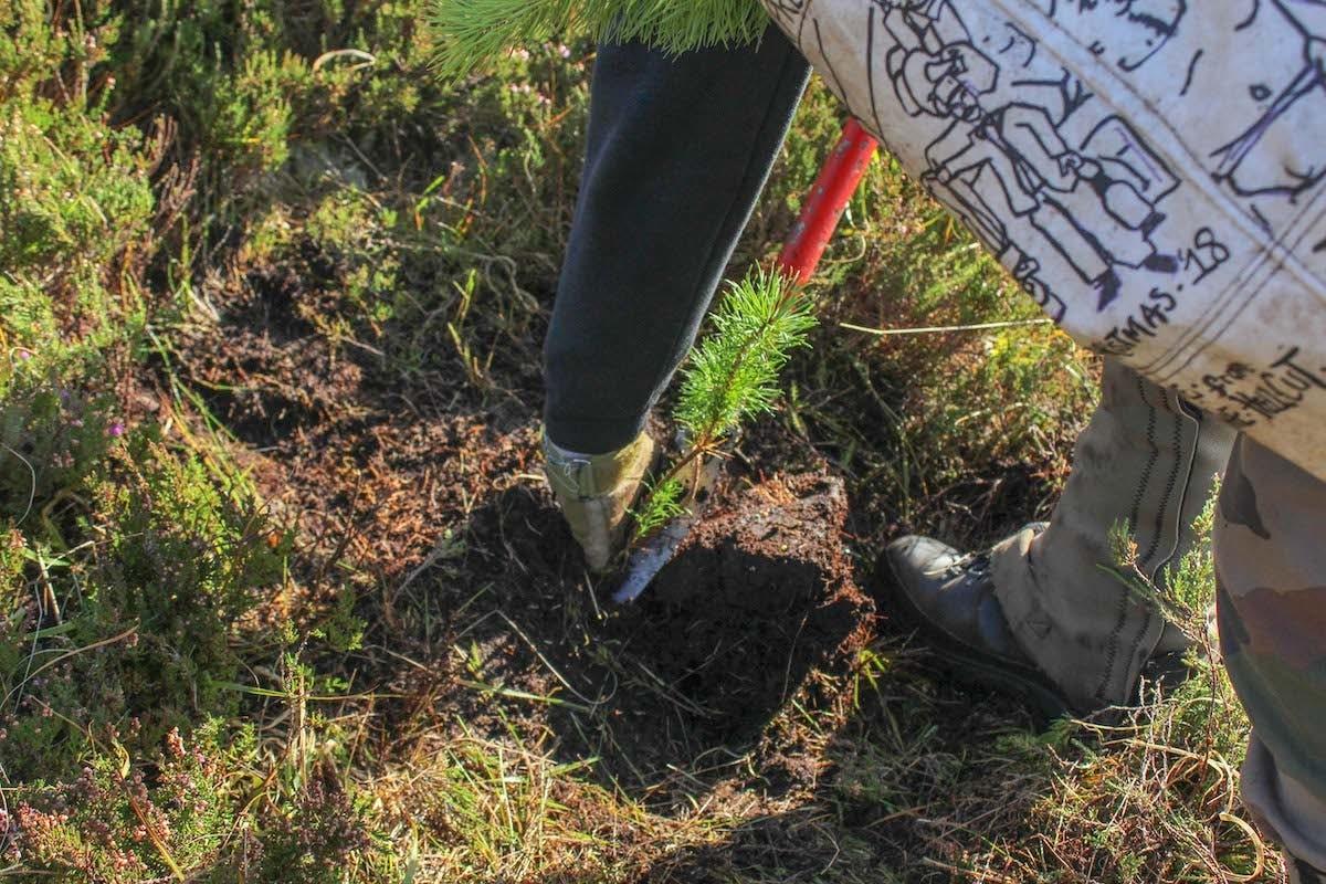 Tree planting in Scotland. Tree planting is one of many ways to help rewild Scotland
