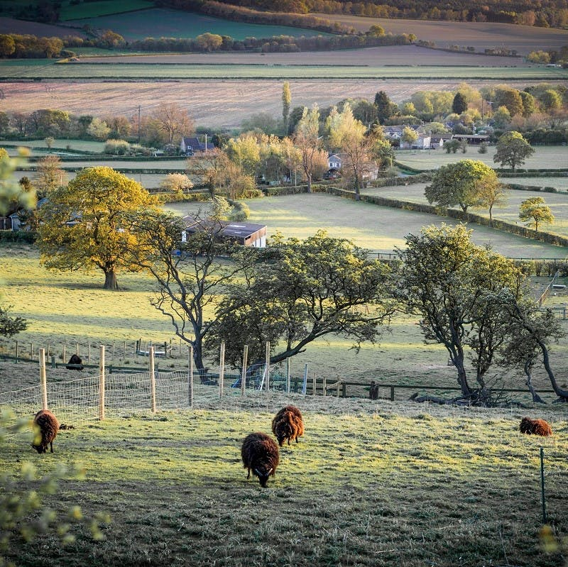 A patchwork of agricultural lands with sheep grazing in the foreground on a frosty morning.