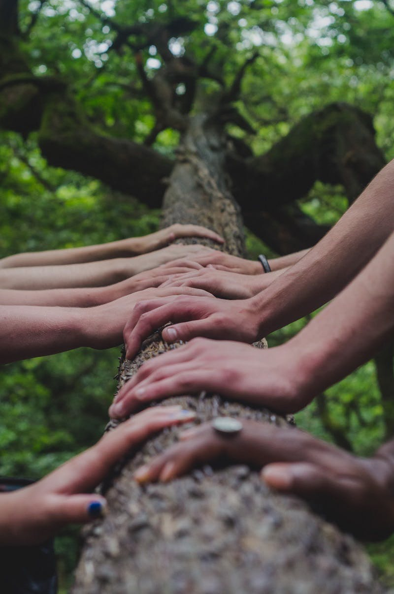 A group of hands resting against either side of a tree trunk.